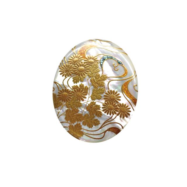 菊水白蝶貝B